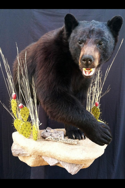 Online Job Search >> bear mount - Taxidermy - CouesWhitetail.com Discussion forum