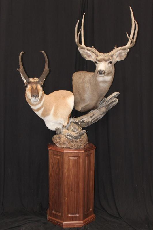 Pedestal Mule Deer And Antelope Southwest Wildlife