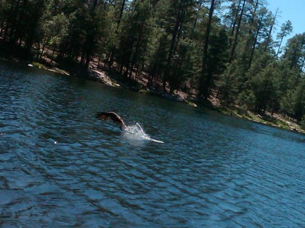 Black canyon lake bassin 39 fishing for Canyon lake az fishing
