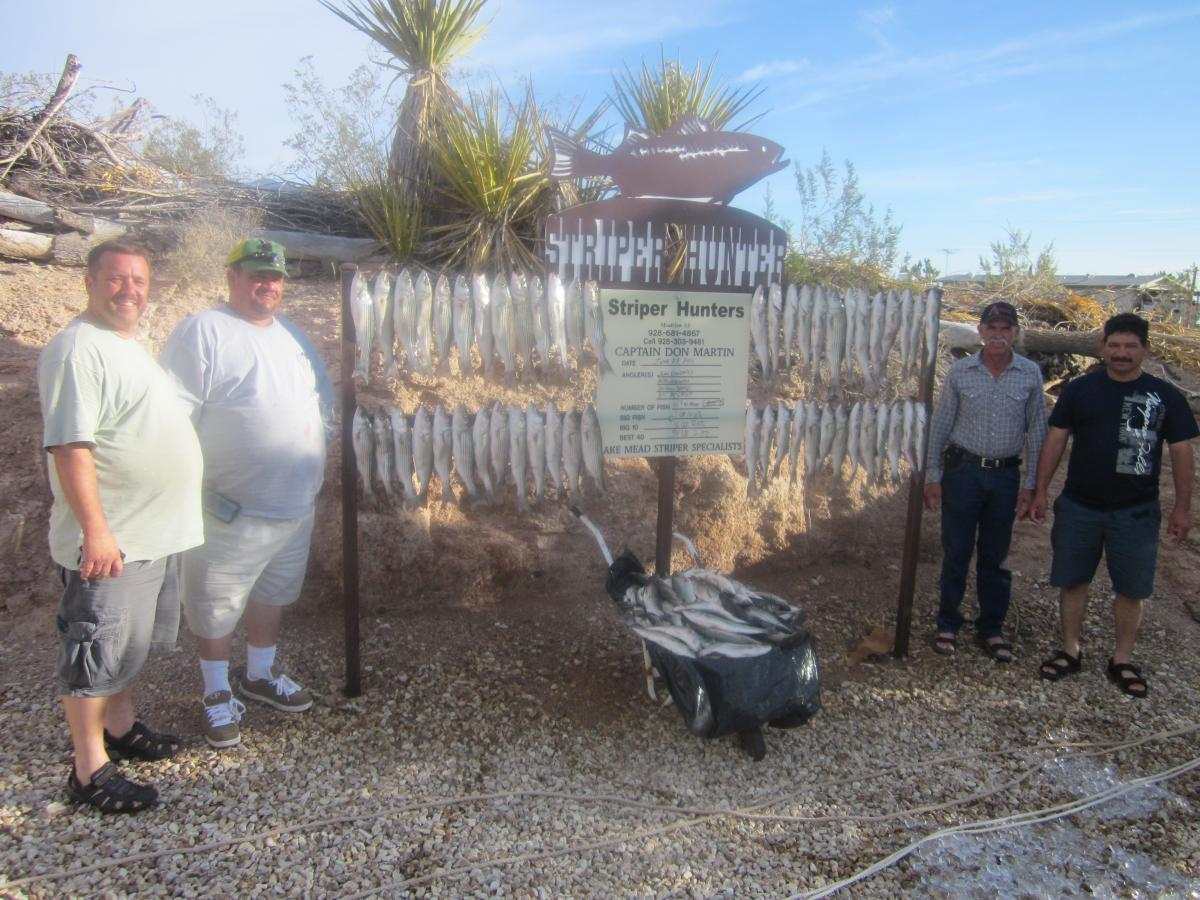Lake pleasant stripers are back on the bite fishing for Lake mead fishing guides