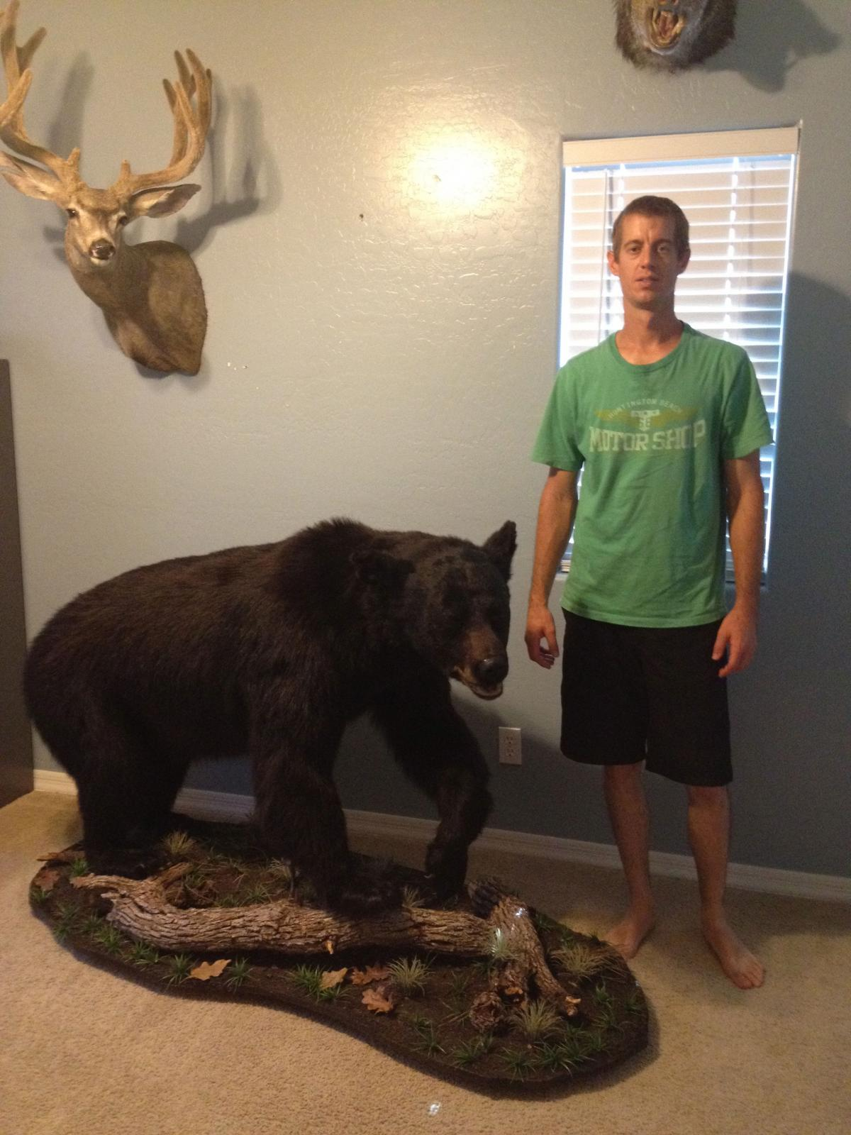 Black Bear Mount Taxidermy Coueswhitetail Com