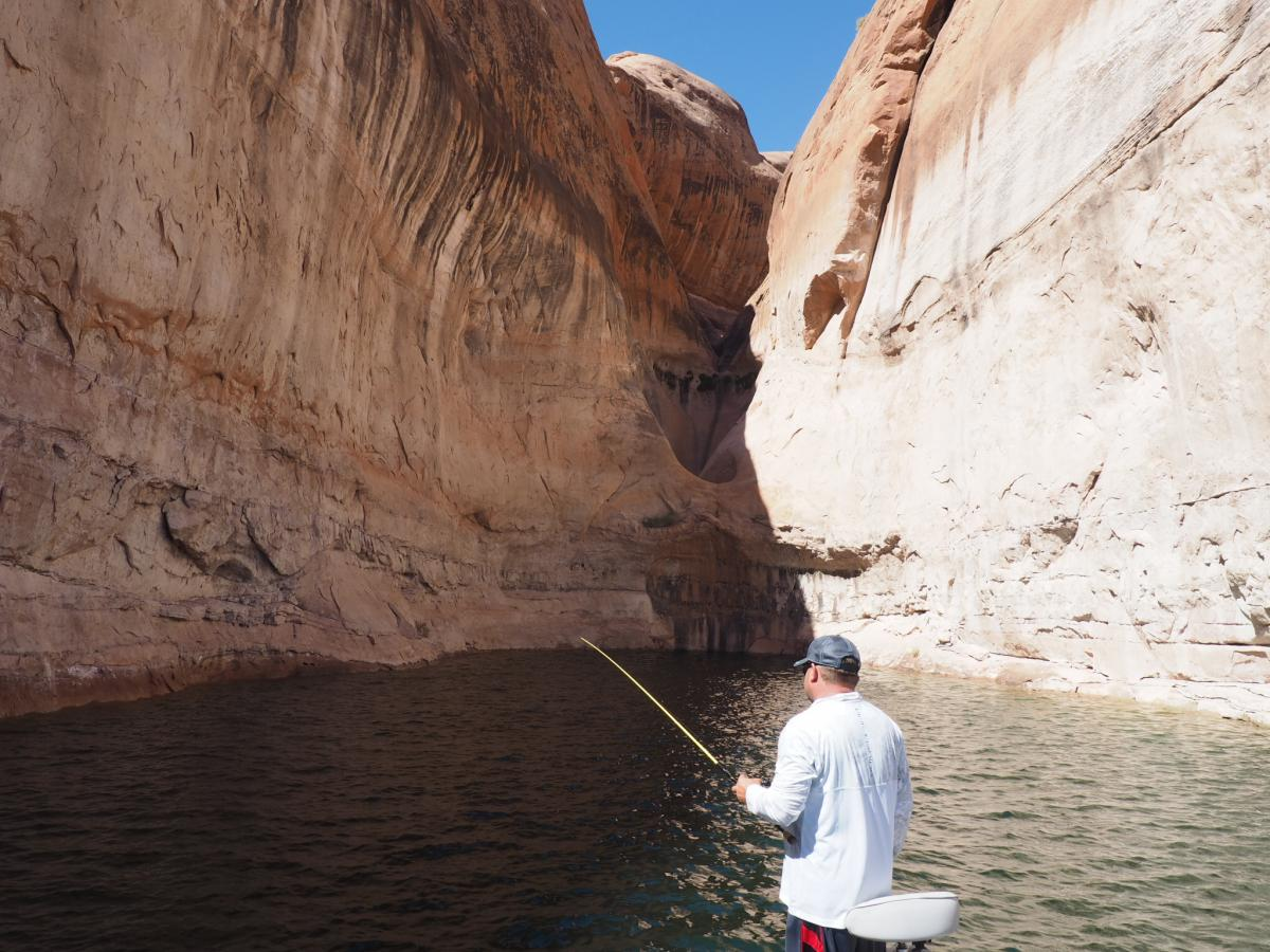 Lake powell fishing discussion forum for Lake powell fishing