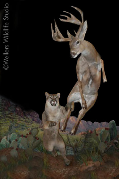 that s sick taxidermy coueswhitetail com discussion forum