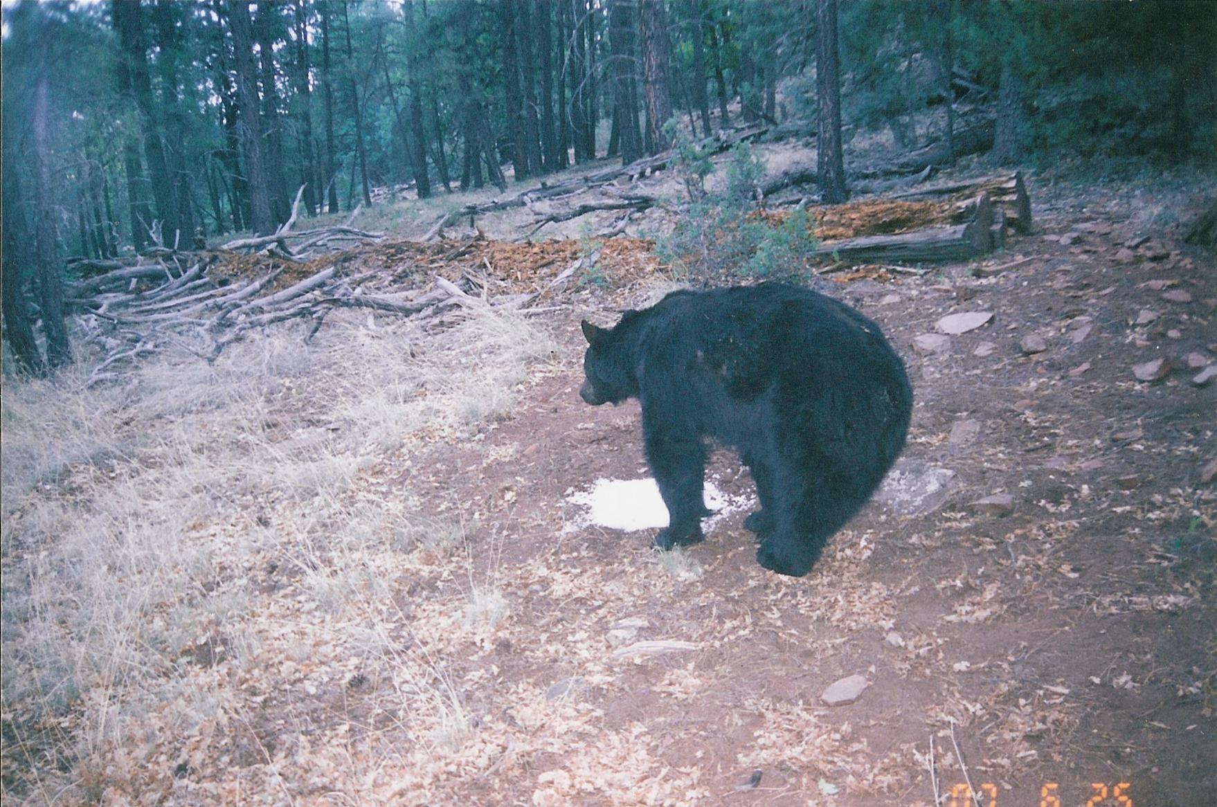 GRANDE BEAR's Photo