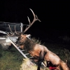 2012 Archery Bull Hunts Are Underway! - last post by elkslare