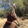 "120"" Coues and a Double Coues Pedestal - last post by Azduckhunter"