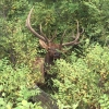Philip Barret's 2014 Auction Tag Coues Buck - last post by Norteno