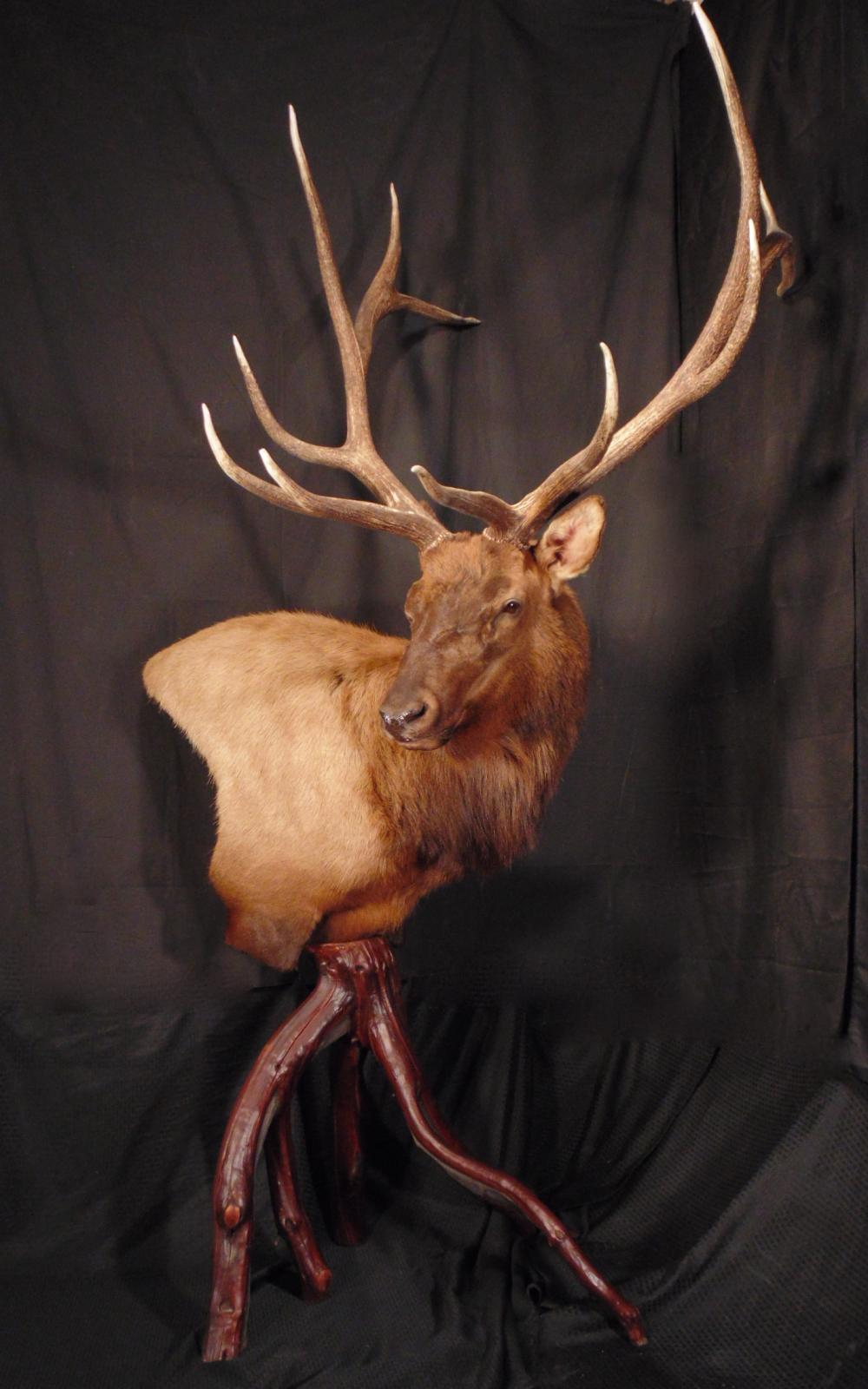 Elk Pedestal Common Reedbuck And A Wall Ped Bear With