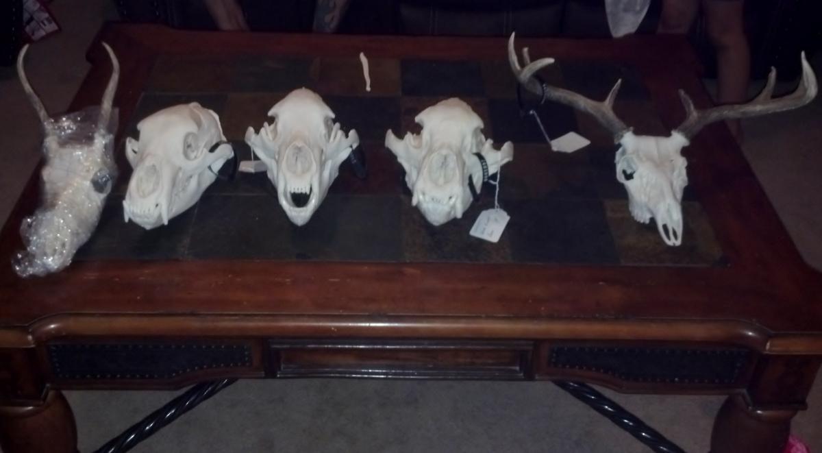 2012 Bear and Archery White Tail Skull Mounts - Black Bear