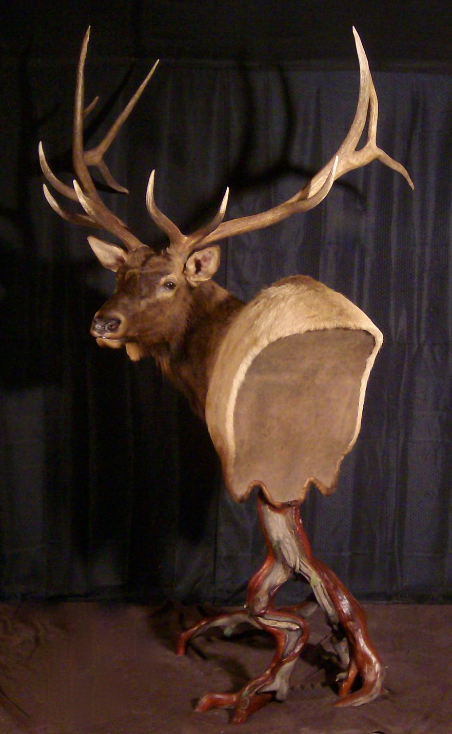 Bison Wall Ped And An Elk Pedestal Taxidermy
