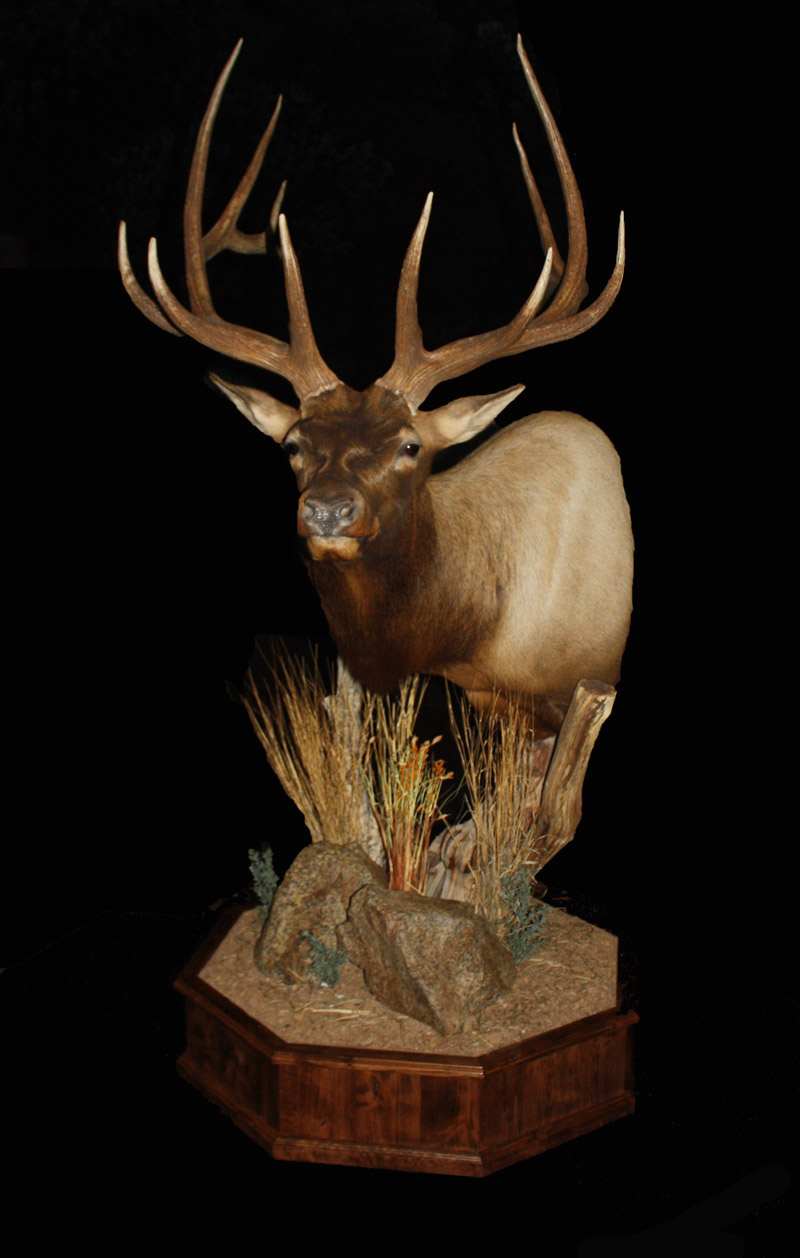 Elk Pedestal Clay Goldman Mogollon Taxidermy