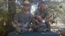 coues whitetail deer buck Arizona