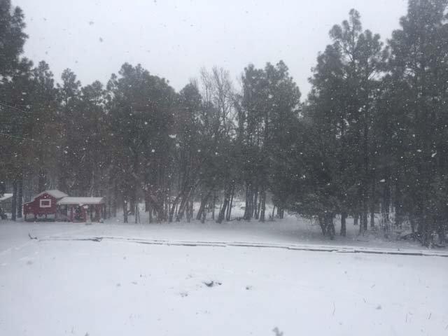 snow.JPG.54b3968fc4dc2e88c8f727779e67b3ef.JPG