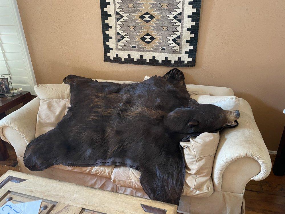 bear 4.jpg