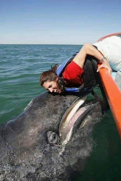whalegirl.thumb.jpg.7c5a4ef9b7ecd1524bdeca1dd3828cf7.jpg