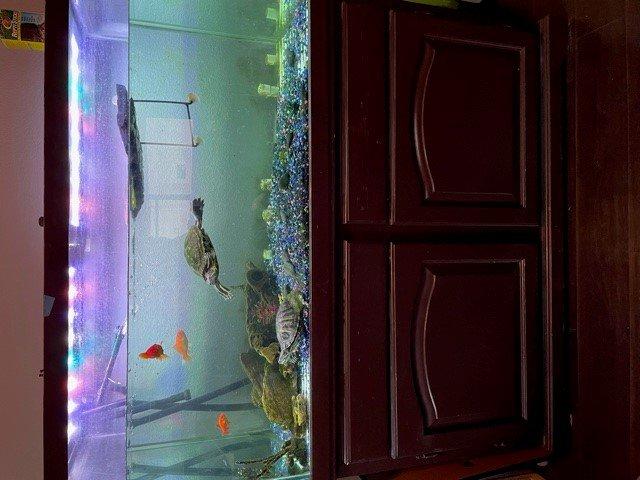 fishtank1.jpg.8f3d8fce5fba1e000bac49ff10e61e05.jpg