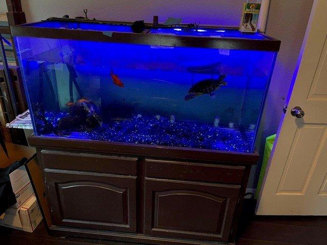 fishtank2.jpg