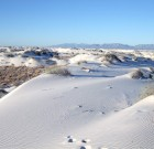 More CWD Found in White Sands Missile Range Deer
