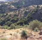 Coues Deer Habitat