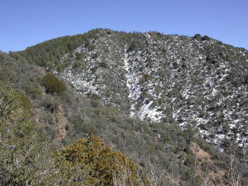 pine brush habitat