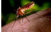 West Nile Virus Information