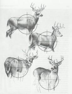 Full Body Whitetail Deer Drawings