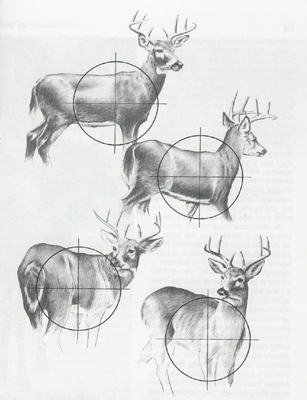 shot placement deer morrigan 39 s lodge. Black Bedroom Furniture Sets. Home Design Ideas