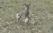 Josh Epperson doe and fawns
