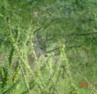 Danny Howard: Spotting scope buck