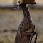 deer-at-feeder-2