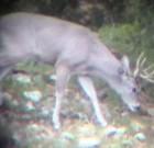 Josh Epperson: Spotting scope buck