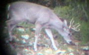 Josh Epperson: Spotting scope buck