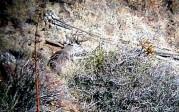 Jim Parker: Spotting scope buck