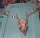 Jordan Stailey's 2003 hunt