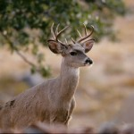 strange-eyed-buck-2