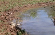 Amanda Moors: Water hole does