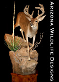 AZ Wildlife Designs