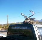 Joe Montano and deer