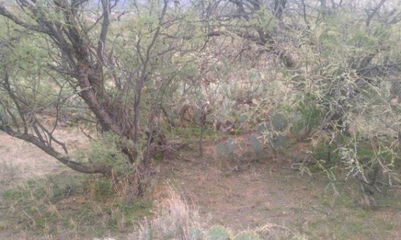 coues shed