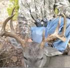 Sterling Donaldson 114 inch buck
