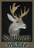 Southwest Wildlife