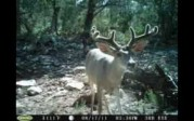 Trail Camera Contest Video 2011