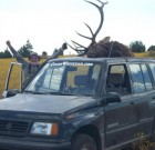 Steven Ward's Suzuki with elk