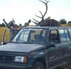 Steven Ward's Suzuki with elk
