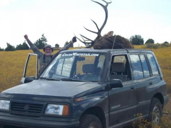 coues deer sticker big elk