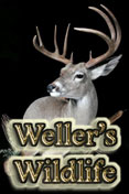 Wellers Wildlife Studios