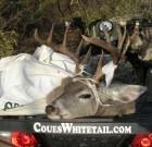 WFGinNM with great buck