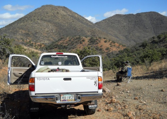 Mexico coues