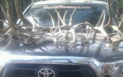 echo co antlers and sticker