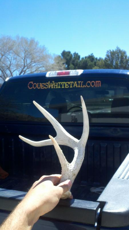 coues deer shed